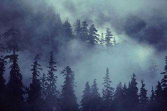 Scene della foresta