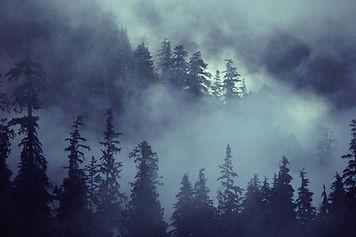 escena del bosque