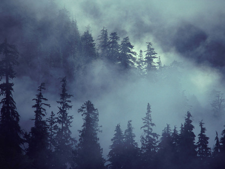Dear Friends ~ The fog and the plan!