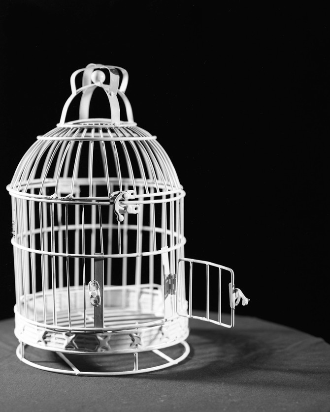 The Skull & The Birdcage