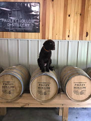 Another Pauley Hollow Puppy