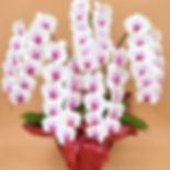 スクリーンショット 2019-06-06 18.12_edited.png