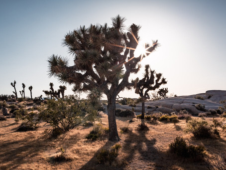 John Denver and the Return to Joshua Tree Part 1 (of 2)