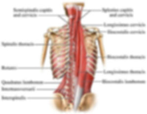 Complete Back Rehab by Graham Healy __RE