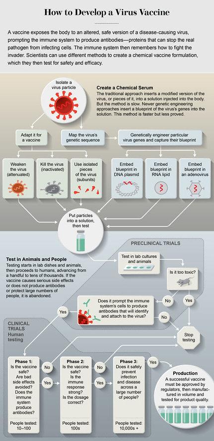 Vacine process.jpg