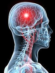 The Brain the Nerve Central Control centre