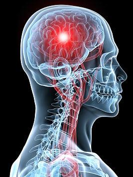 Nerves-Brain-Organs-Interconncet