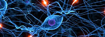 Nerves Electrical Impulses + or -