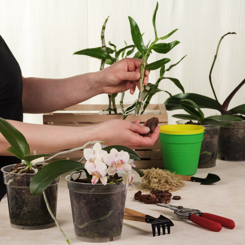 Orchid Planting Session