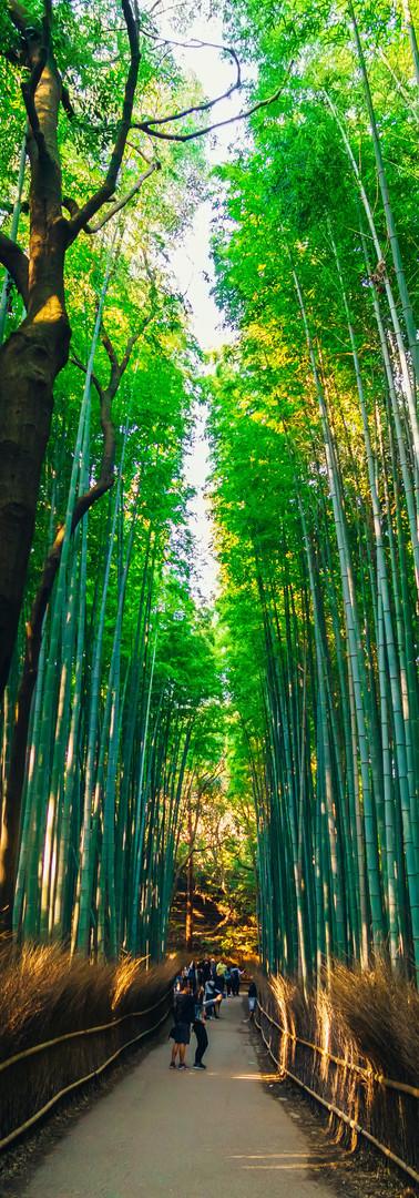 Arashimaya Bamboo Forest.jpg