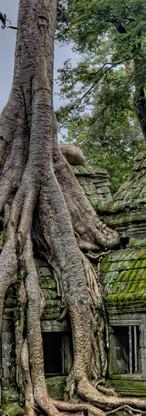Tomb Raider Tree.jpeg