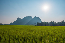 Ricefields in Hpa-An