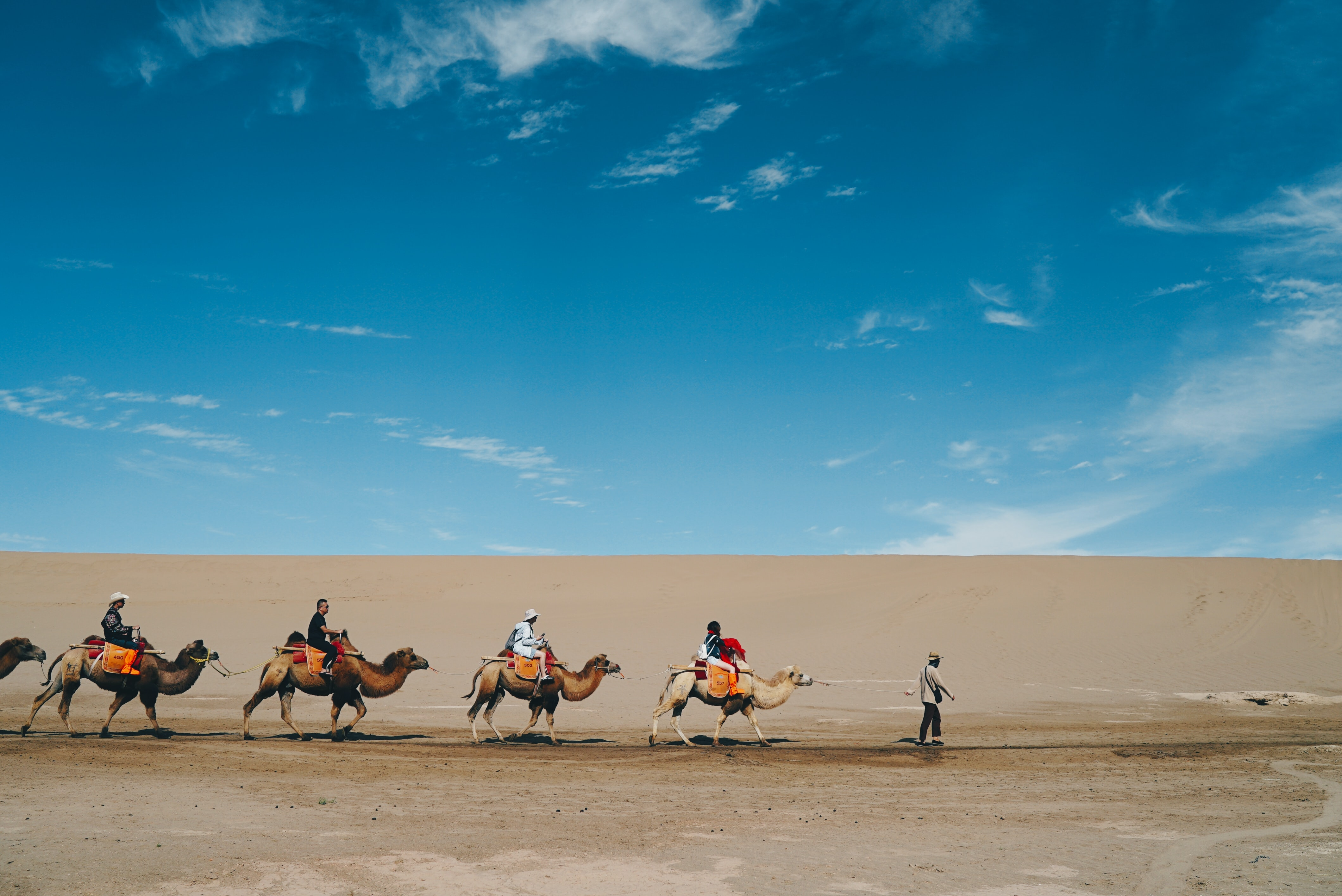 Camel Riding Dunhuang