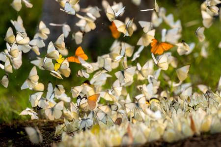 Cuc Phuong Butterflies