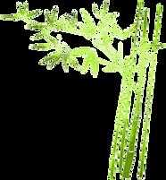 menta y bambu