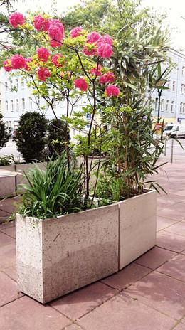 Blumentöpfe_Beton.jpg