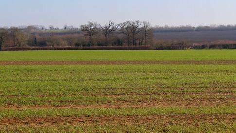 Fields from Pegnut Wood