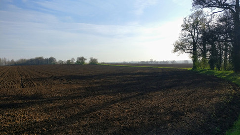 Fields near Sutton