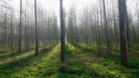 Pegnut woods