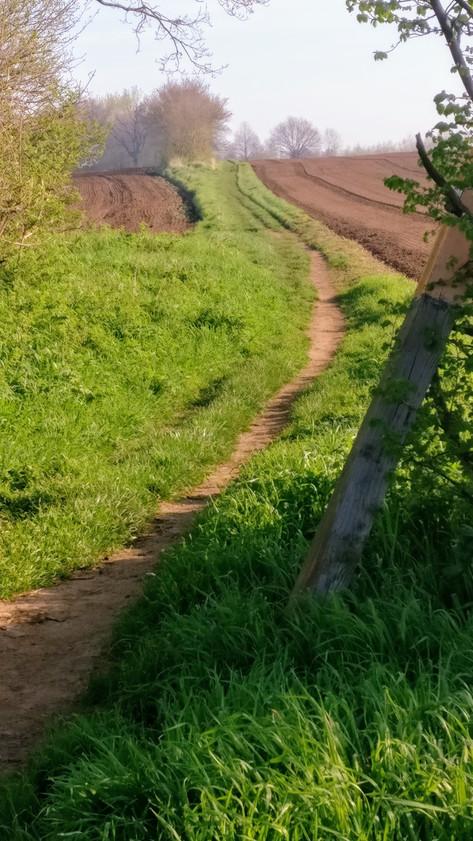 Sutton to Potton path