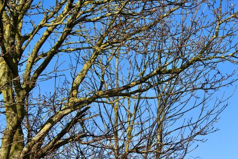 Tree in Pegnut