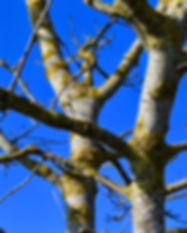 Trees in Potton