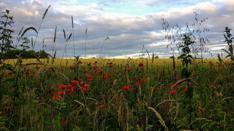 View over fields near Pegnut