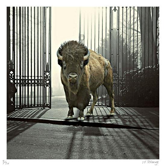 Mr Strange - Le Zoo est Ouvert