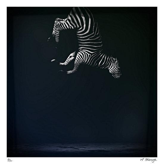 Mr Strange - Eqqus Zebra Dernier specimen