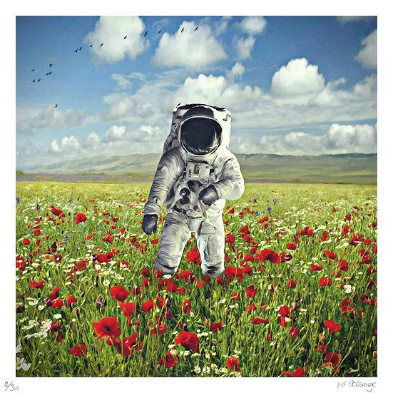 Mr Strange - Champs de Fleurs sur la planète Terre