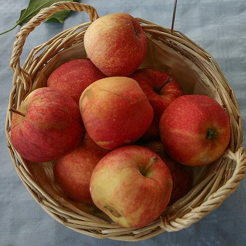 British Royal Gala apples