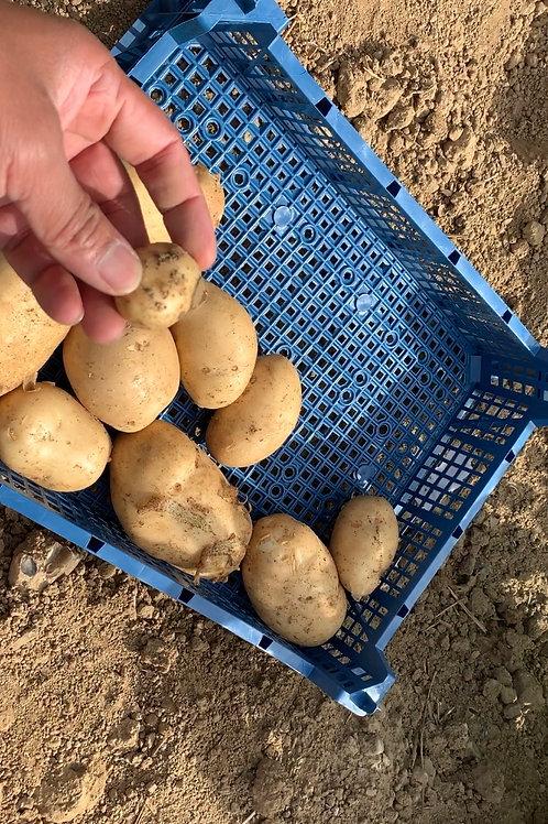 Potatoes (Estima)