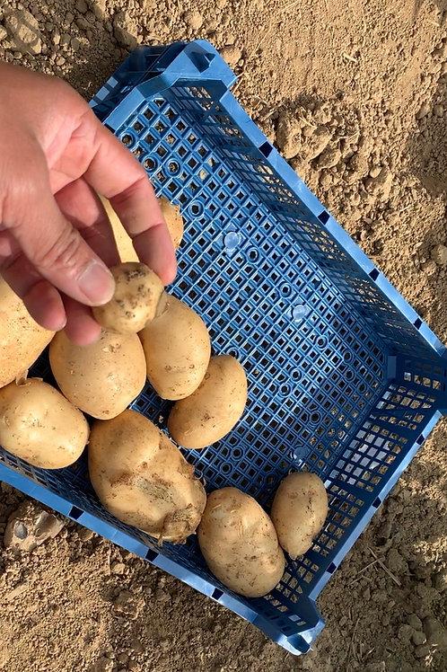 Potatoes (Marfona)