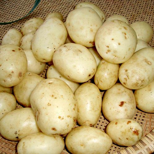 Accord potatoes