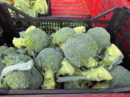 English broccoli