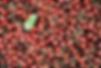 Kirschen_06950%20(14)_edited.png