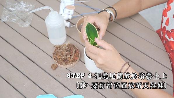 step 4.jpg