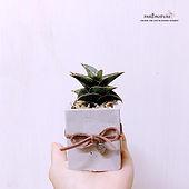 snake plant 4.jpg