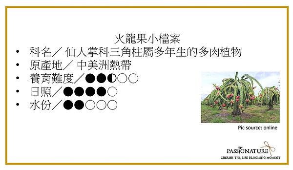 dragonfruit profile.jpg