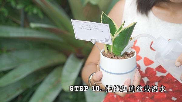 step 10.jpg