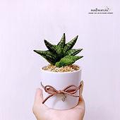 snake plant 7.jpg