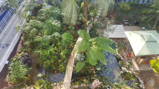 Champion Award Winning Tropical Garden