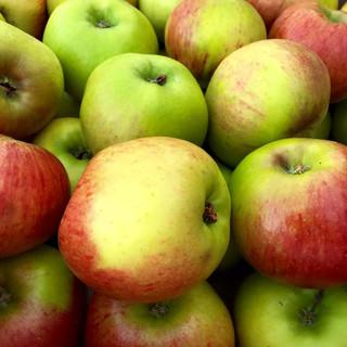 bramley apples.jpg