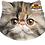 Thumbnail: Pet Faces Soft Feel Novelty Cushion - Persian Cat