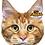 Thumbnail: Pet Faces Soft Feel Novelty Cushion - Maine Coon Cat