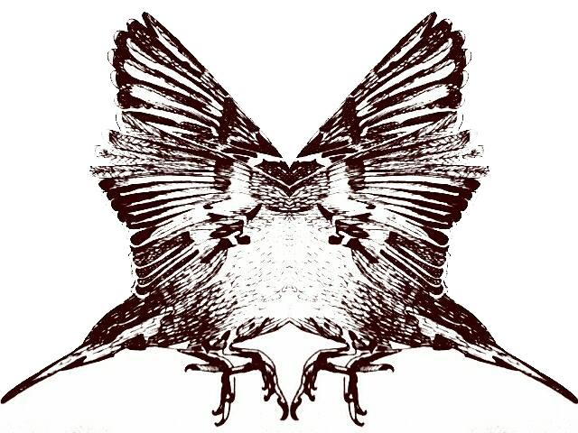 vlindervogel