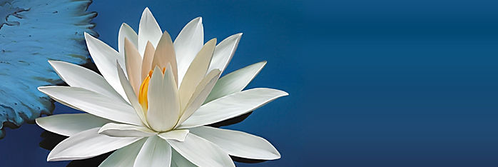 lotus%20pic%201_edited.jpg
