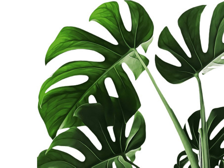 BIOPHILIA: What is it?
