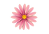 Flower 9.png