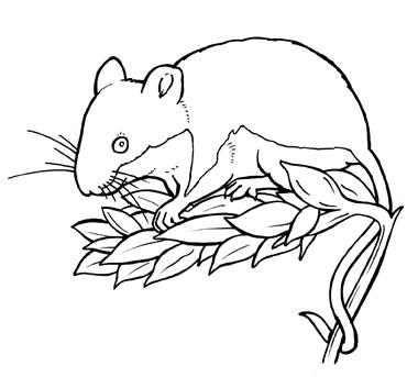 field-mouse.jpg